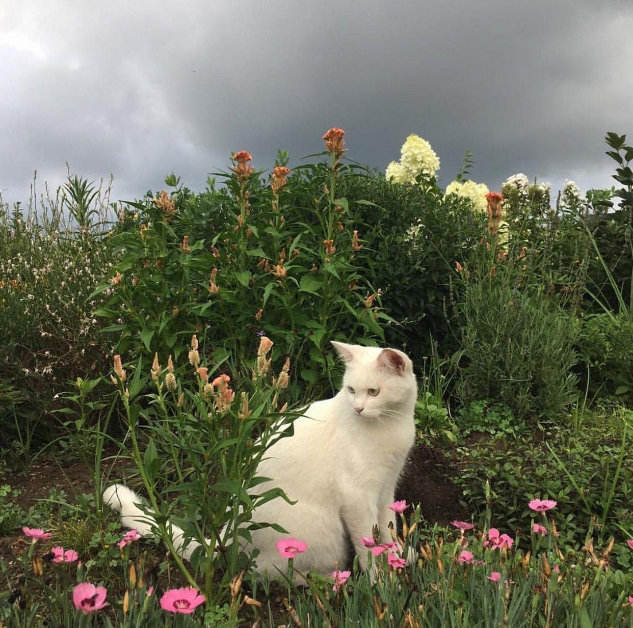 White Cat In The Garden Cat Whitecat Feline Cat Aesthetic
