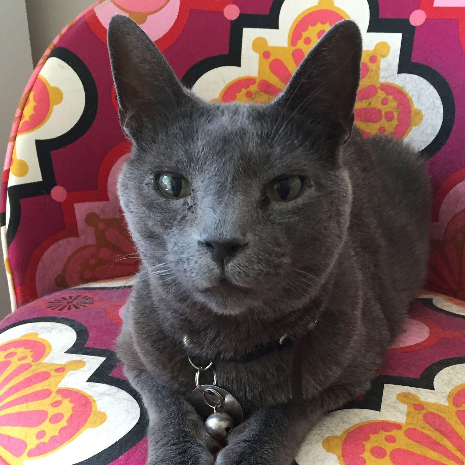 podae mugshot of author on Cat Snipcademy Litter box