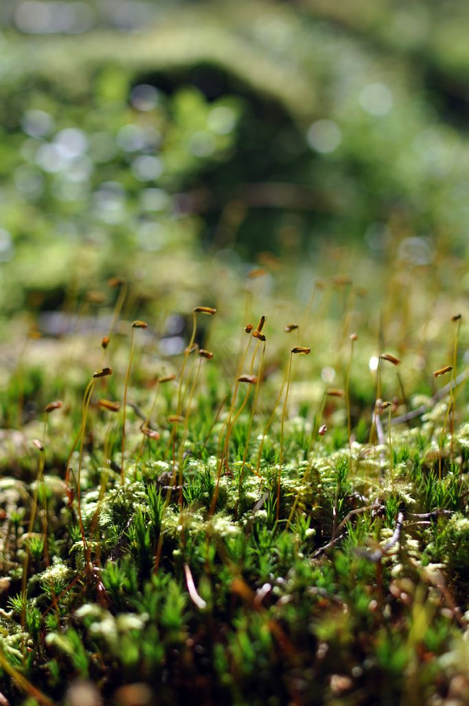 Bratte bakka og grøne lier: Haust i skogen