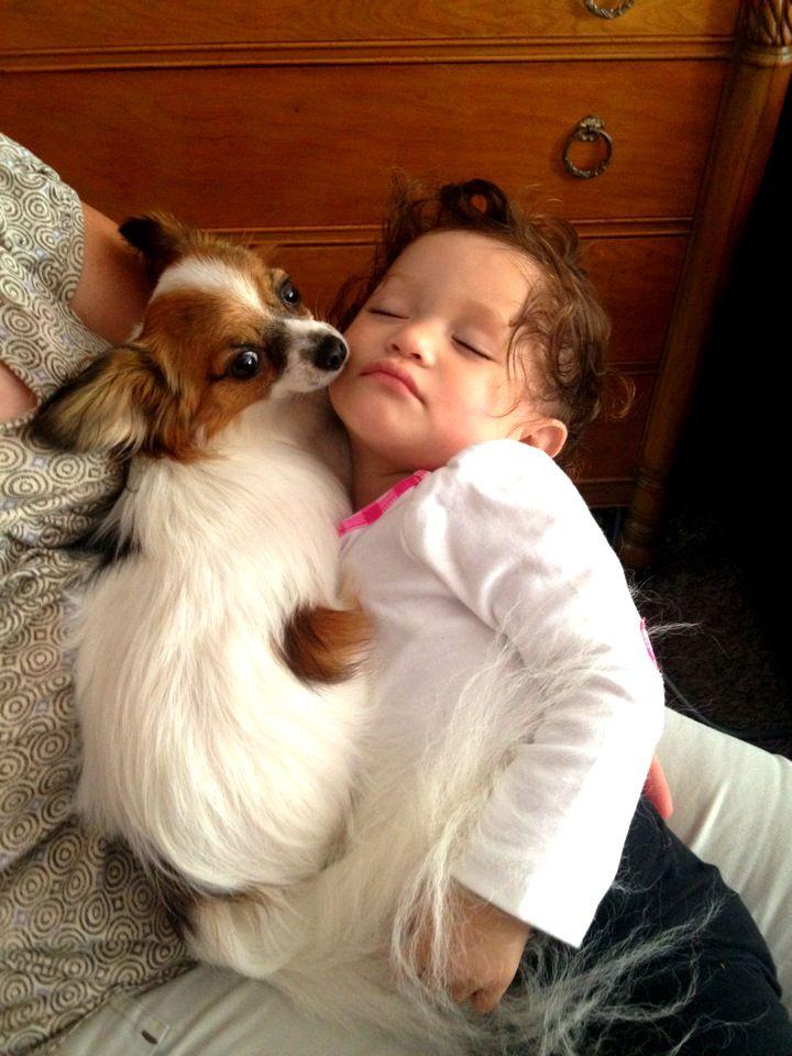 Sleeping baby and papillon