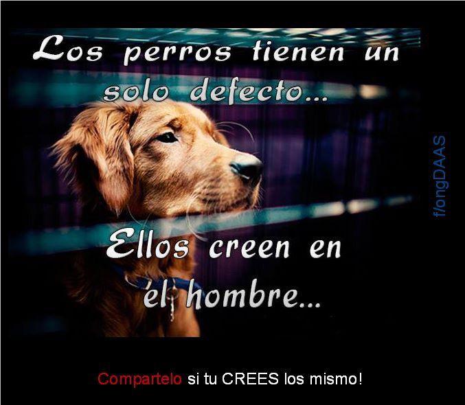 Los Perros Tienen Un Solo Defecto Creer En El Hombre Aun Cuando Les Ha Fallado Perros Frases Amo Los Perros Perros