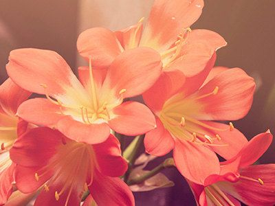 Beautiful Flower Canvas Print - Brighten up any room in the house.