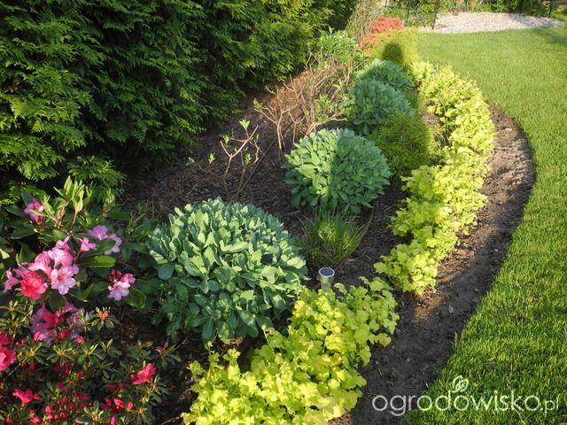 Ogród hortensjowo brzoskwiniowy - strona 677 - Forum ogrodnicze - Ogrodowisko