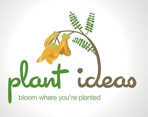 #logodesign integrating the New Zealand #kowhai flower #designinspiration #inspiration #design