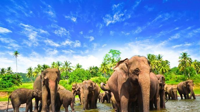 sri lanka travel hd - Google Search