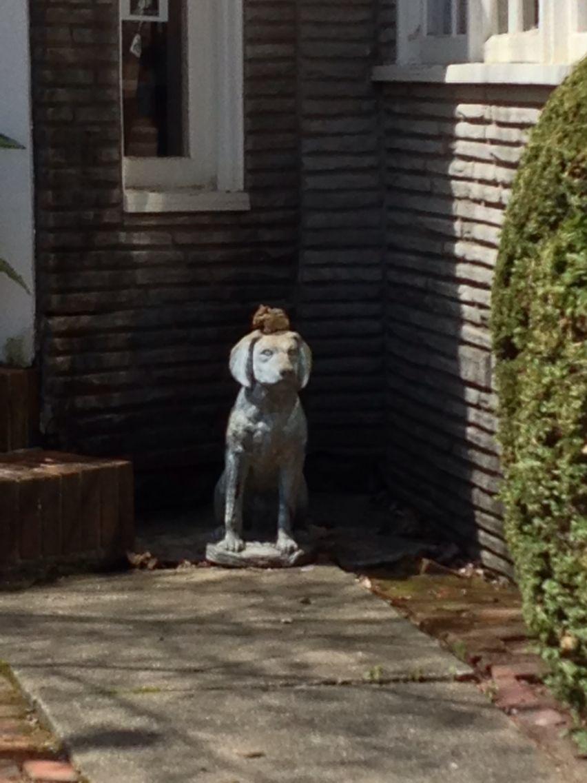 A chipmunk on a dog animals chipmunks