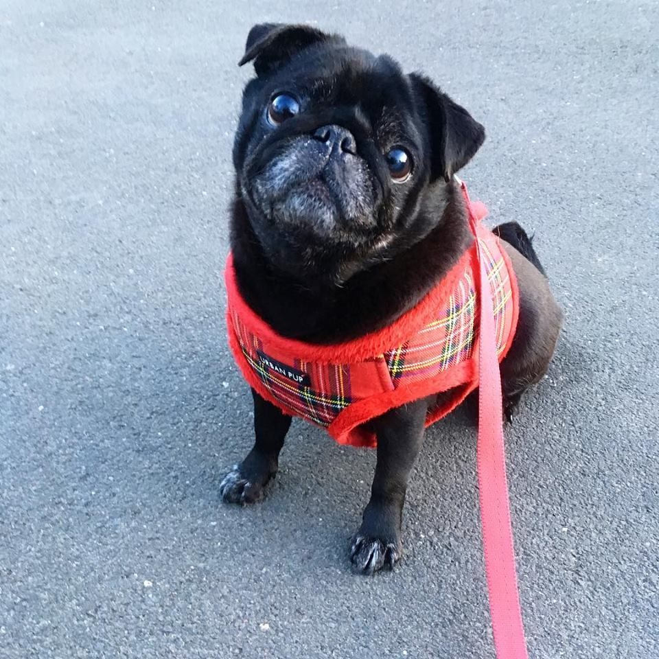 Urban Pup Fleece Lined Step In Jacket Harness Available At Www