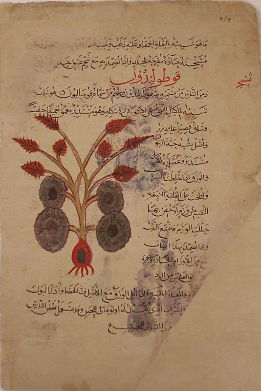 Folio From A Materia Medica Of Dioscorides Islamic 13th Century