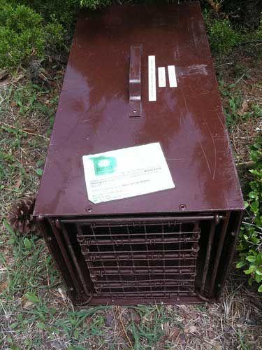 Photo Credit: Wesley Fryer | Getting rid of skunks, Rid ...