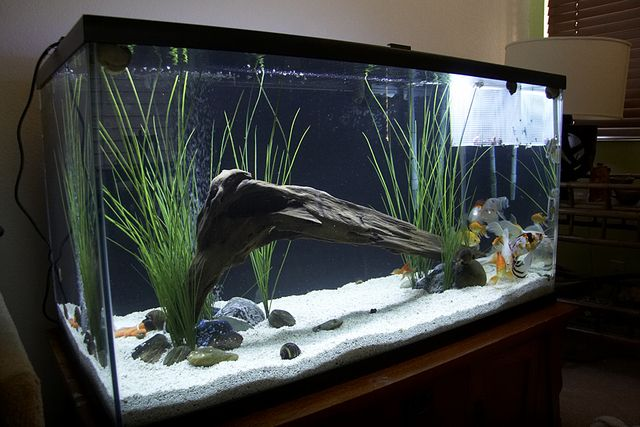 Aquarium idea fishing stuff pinterest aquarium ideas for Fish tank decorations cheap