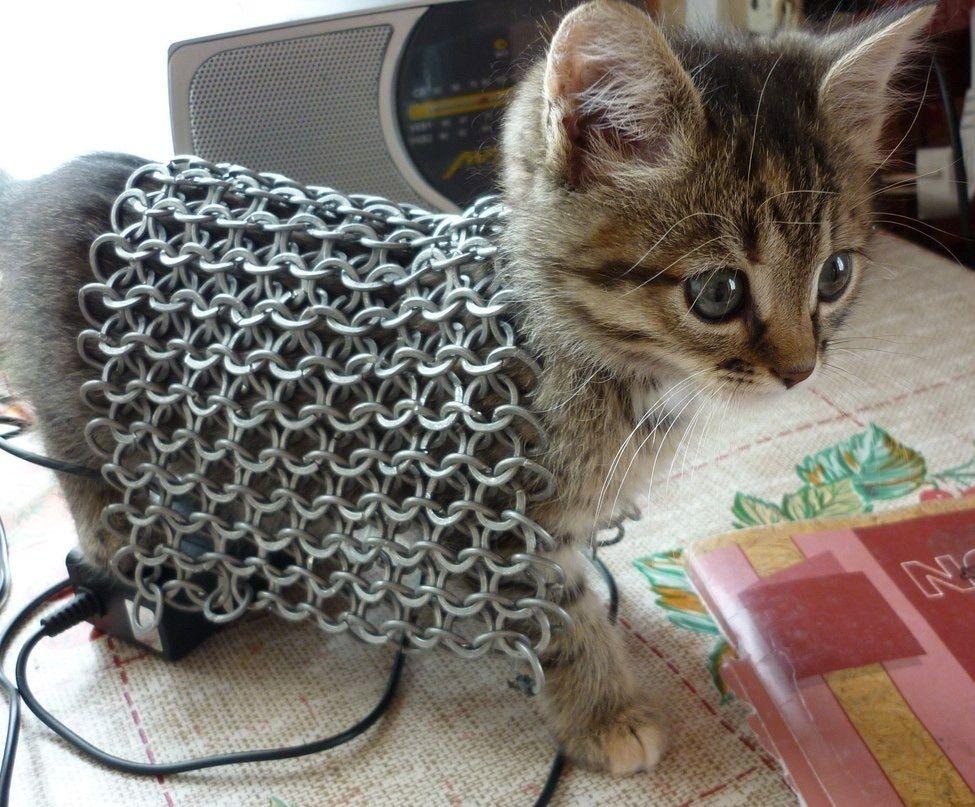 Kitten Chain Mail Mail Skyrim Katten En Grappige Dingen