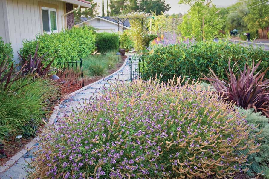 Garden Ideas To Replace Grass replace your lawn with grass alternatives—dryland beauty lilac