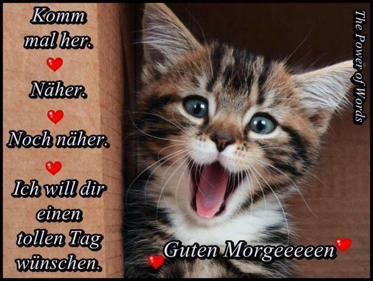 Photo of Netzfund, # Katzen # Katzen schlafen # süße Katzen