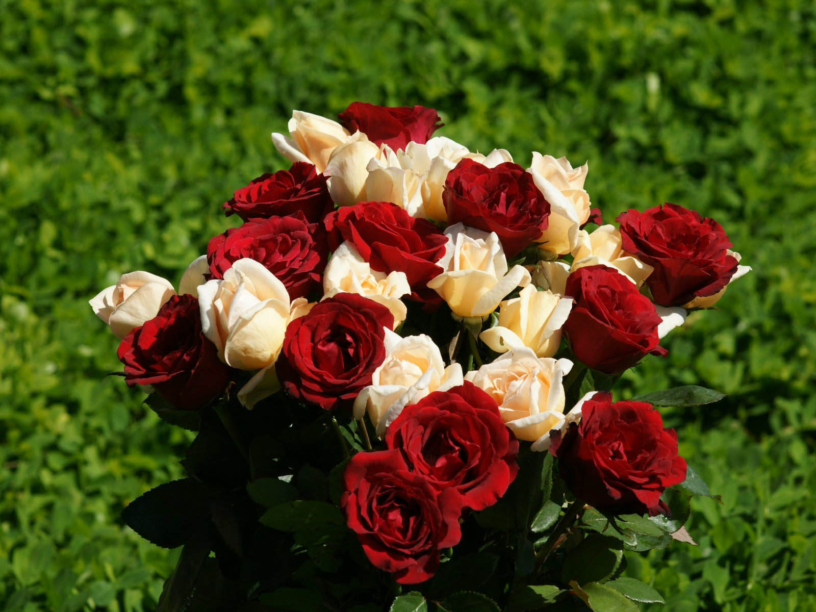 Red Rose Flowers Desktop Wallpaper A Roses 4 Pinterest Rose