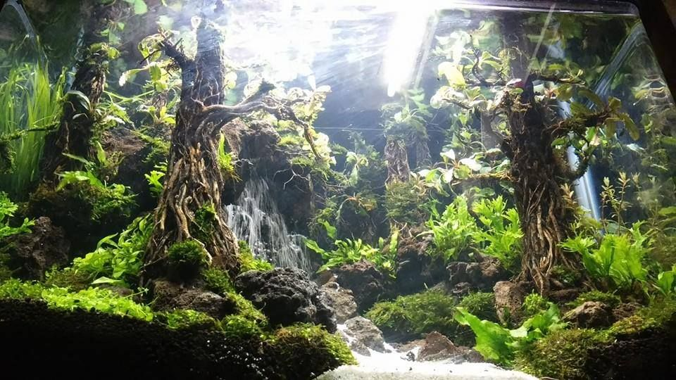 underwater waterfalls ! aquascaping (With images ...
