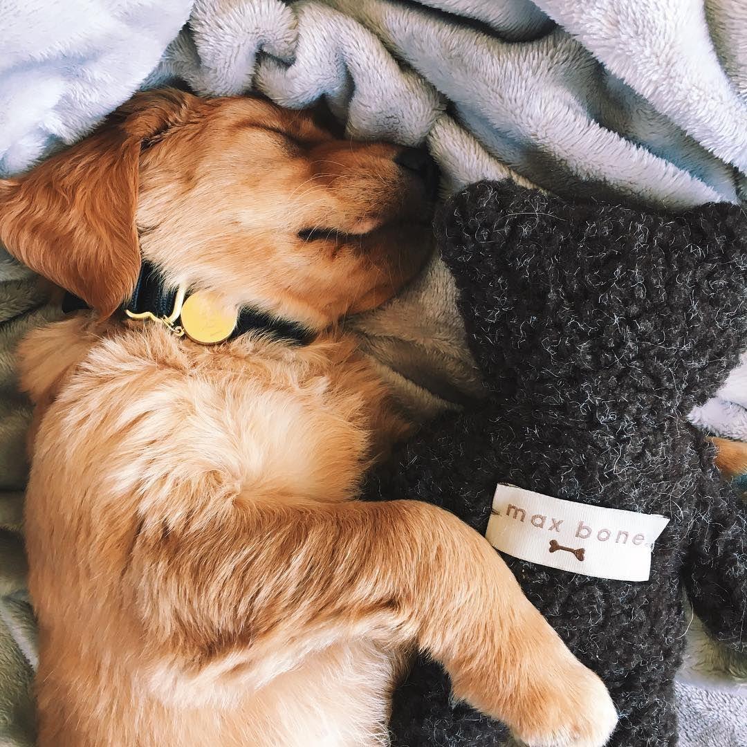 Puppy Naps Are The Best Naps Adventures Of Louis Hi I M Louis