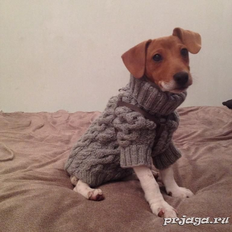 Свитер, вязание для животных - Татьяна Усенко