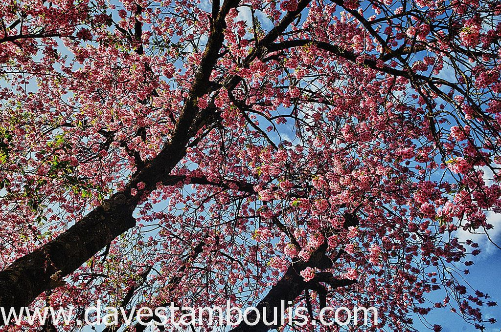 Kim Kardashian Kanye West Threw Amazing Cherry Blossom Theme Baby Shower For Third Baby Cherry Blossom Theme Cherry Blossom Wedding Theme Blossom Tree Wedding