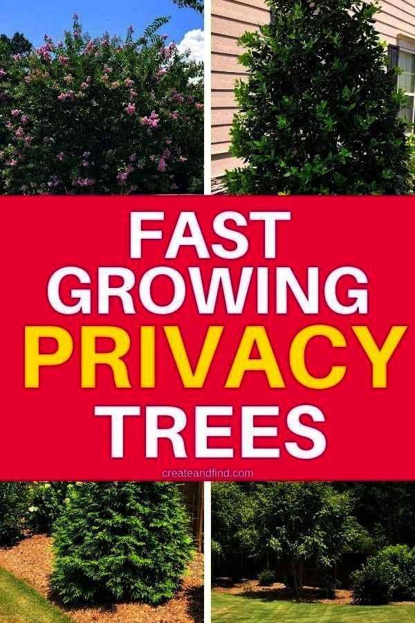 Growing Privacy TreesfastGrowing Privacy TreesfastFast Growing Privacy Treesfast Trees that grow quickly to give you privacy in no time Ill show you how we added shade to...