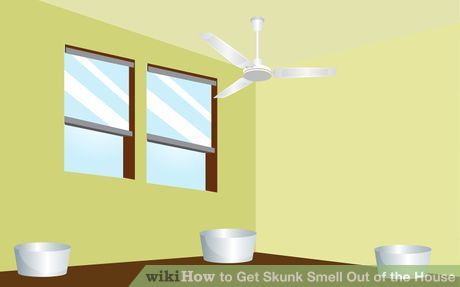 How To Get Skunk Smell Out Of The House Skunk Smell Skunk Smell In House Skunk Smell Remover
