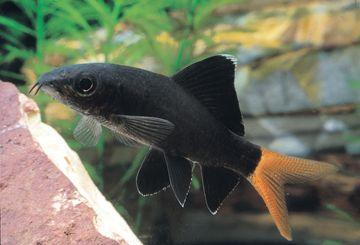 Pin By Mamat Darrah On Tropical Fish Saltwater Aquarium Fish Aquarium Fish Tropical Fish