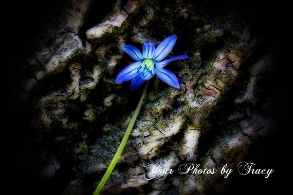 Blue Flower Set Against Tree Bark High by YourStuffbyTracy on Etsy