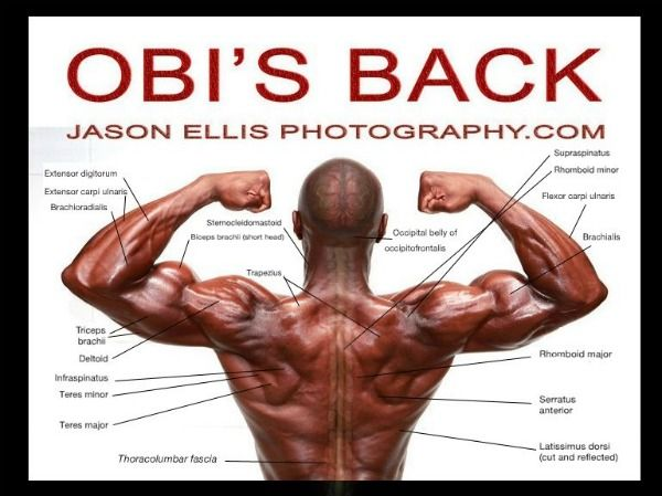 Gallery For > Defined Back Muscles | Anatomic Reference ...