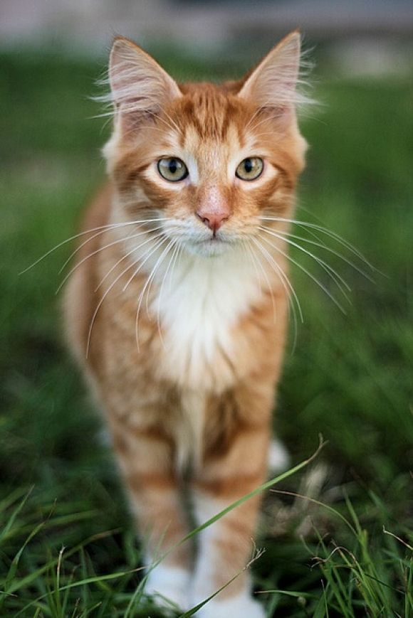 Pin By Monalisa On Cats Cats Pretty Cats Beautiful Cats