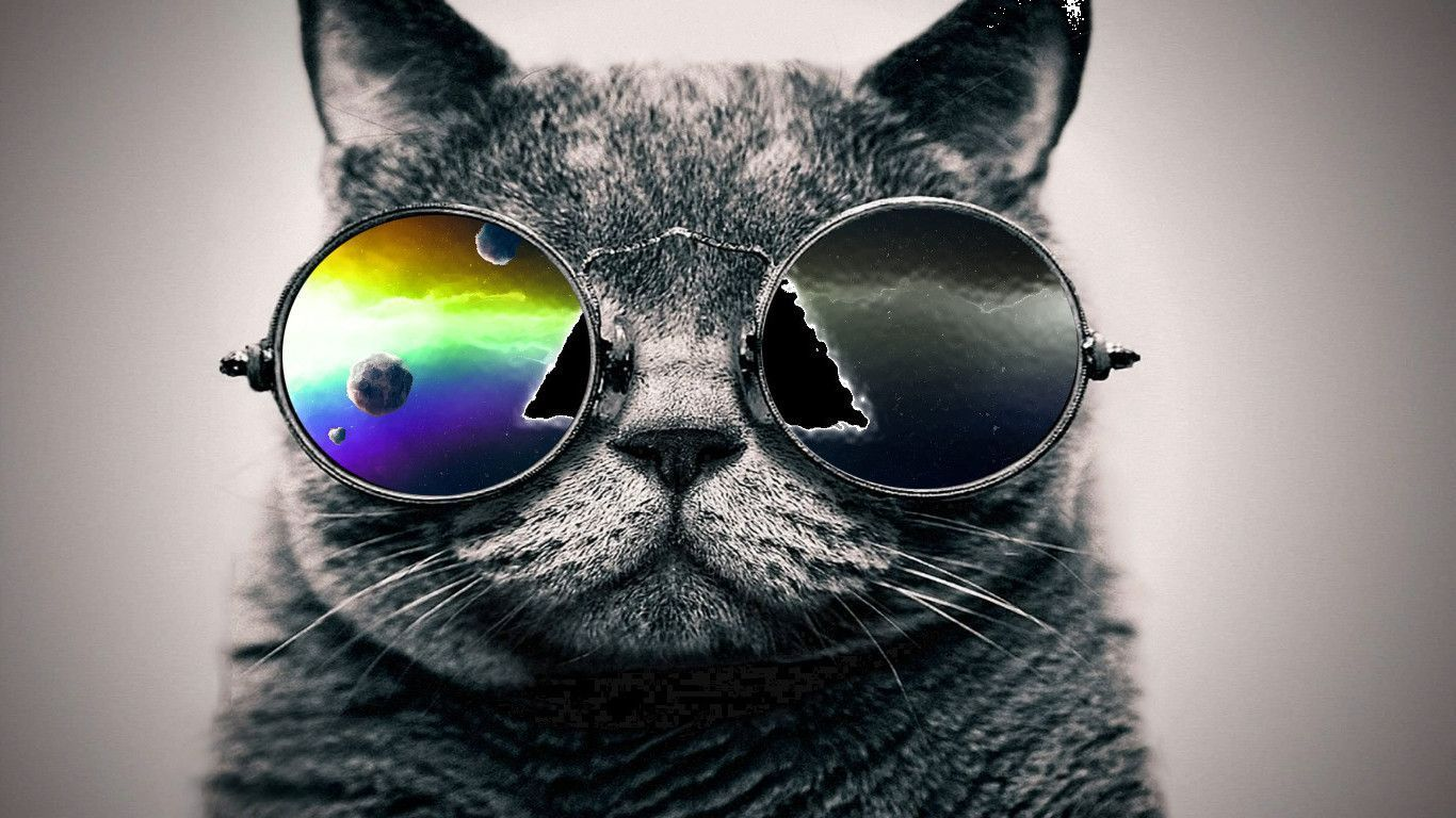 Download Cat wallpapers to your cell phone cat galaxy
