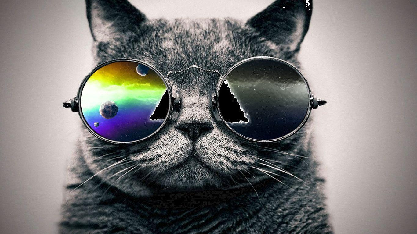 Обои кот в очках на телефон