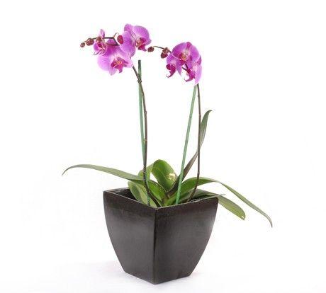 Planta de orqu deas con su maceta disponible en - Maceta para orquideas ...