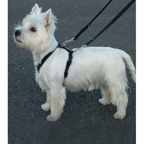 Canine Products Dog Training Leads Dogs Dog Training