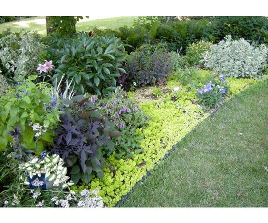 Design Lessons From A Minnesota Shade Garden Shade Garden Minnesota Garden Urban Garden