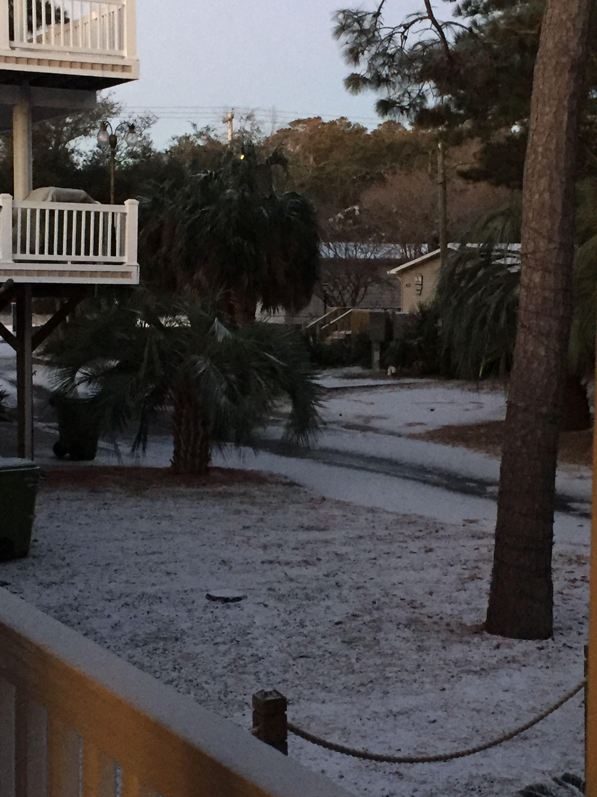 Our front yard Front yard, Myrtle beach, Garden