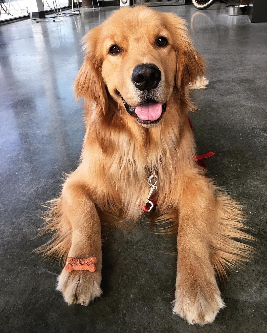 Pinterest Catherinesullivan2017 Dogs Happy Dogs Dog Love