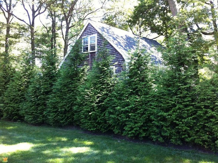 TOP 10 Fastest Growing Shade Trees | Fast growing shade trees ...