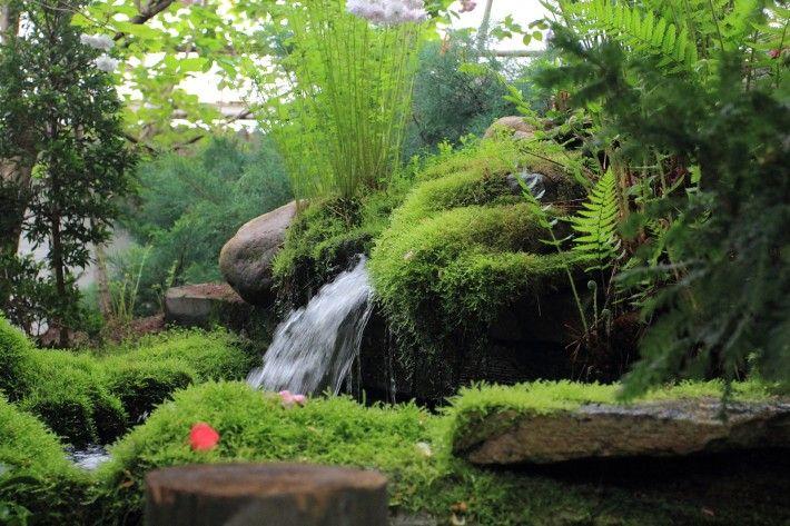 japanilainen_puutarha