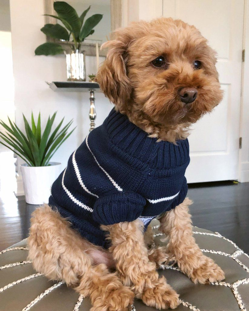 Cozy Coastal Sweater Matching Sizes For Dogs Humans Cute Dog