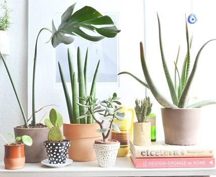 Zimmerpflanzen Für Sonnige Standorte zimmerpflanzen pflegetipps moderne deko geldbäumchen und blätter