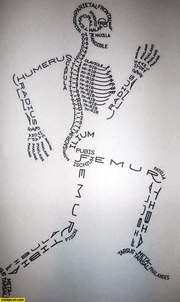 Los nombres de los huesos del cuerpo humano en inglés :) | Varios ...
