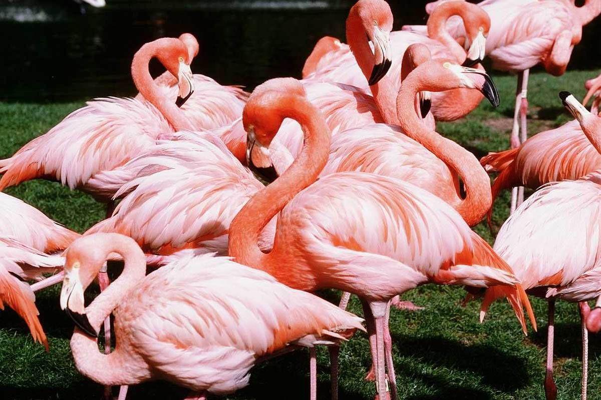 основном фламинго картинки и человек для бани сауны