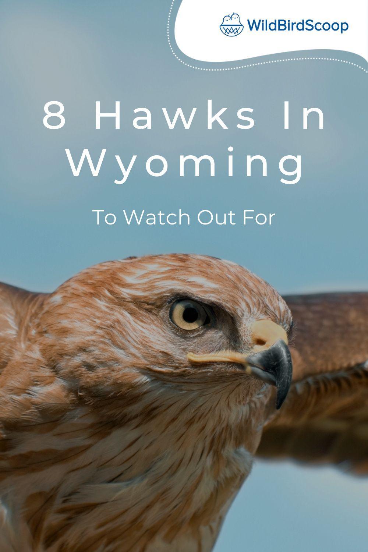 1d3eb042ee04429991132465b5616b0b - How To Get A Hawk Out Of A Building