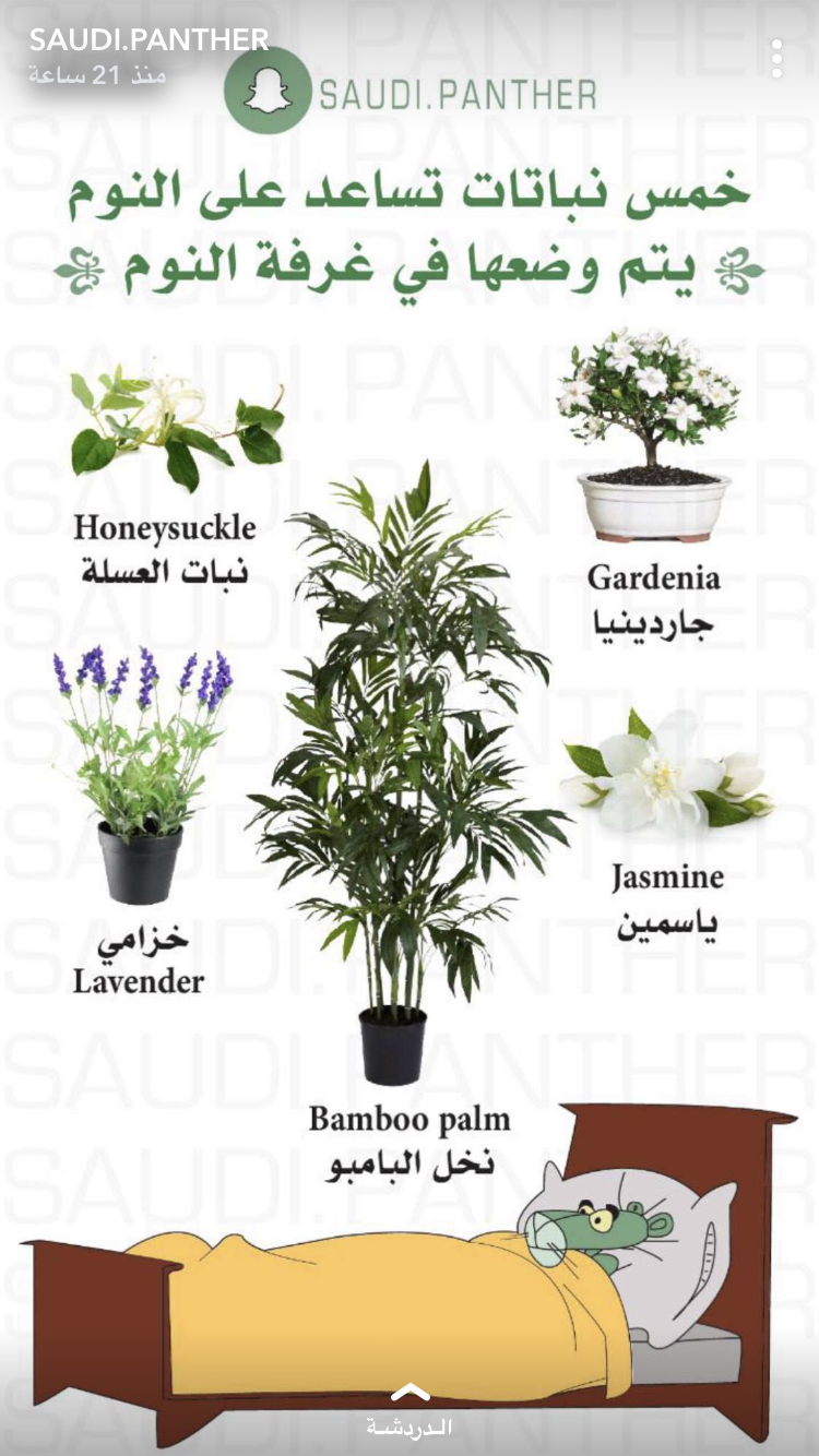 Pin By Sabah Alhunaidi On شتلات للمنزل Container Herb Garden Garden Care Planting Herbs