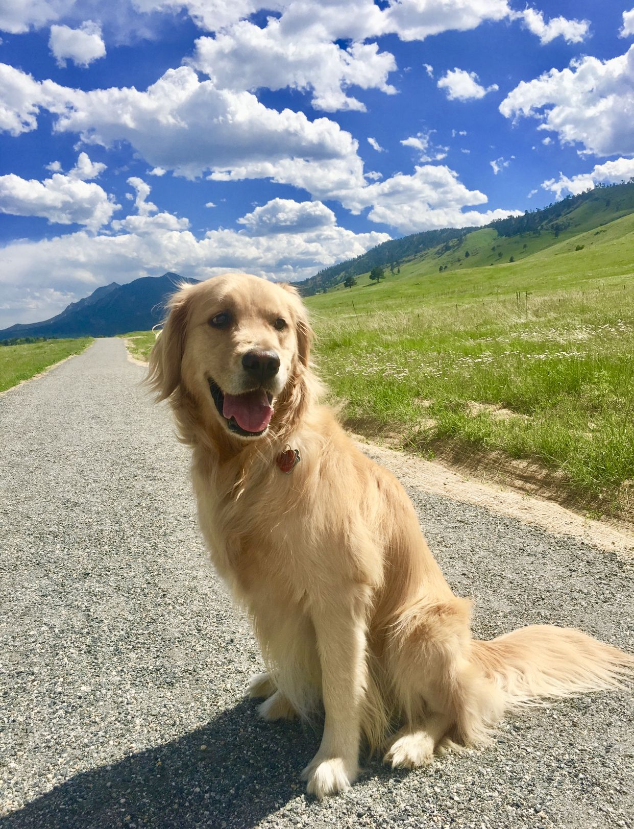 Gold Retrievers Doing Cute Funny Things Ig Tazthings With