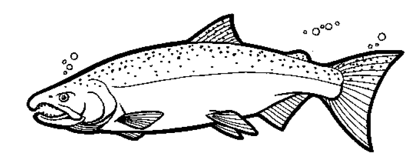 coho salmon colouring pages