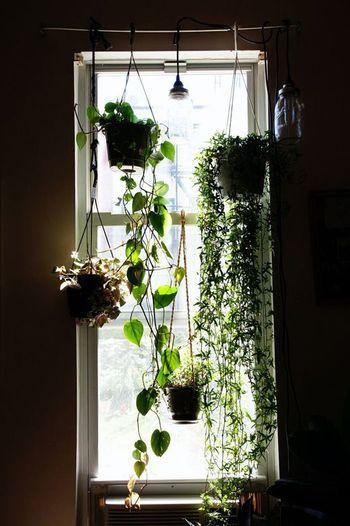 ハンギングプランター に挑戦してみない 観葉植物をもっと楽しもう