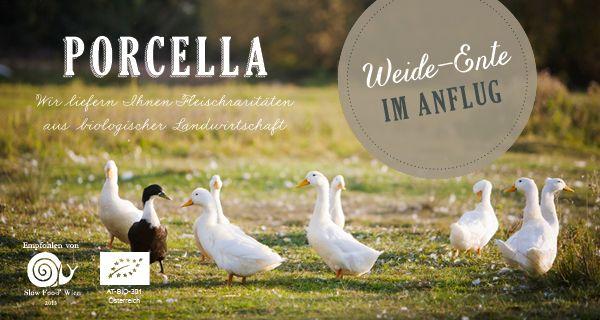 Bio Weide-Enten ab sofort immer erhältlich - Rezepte und Links