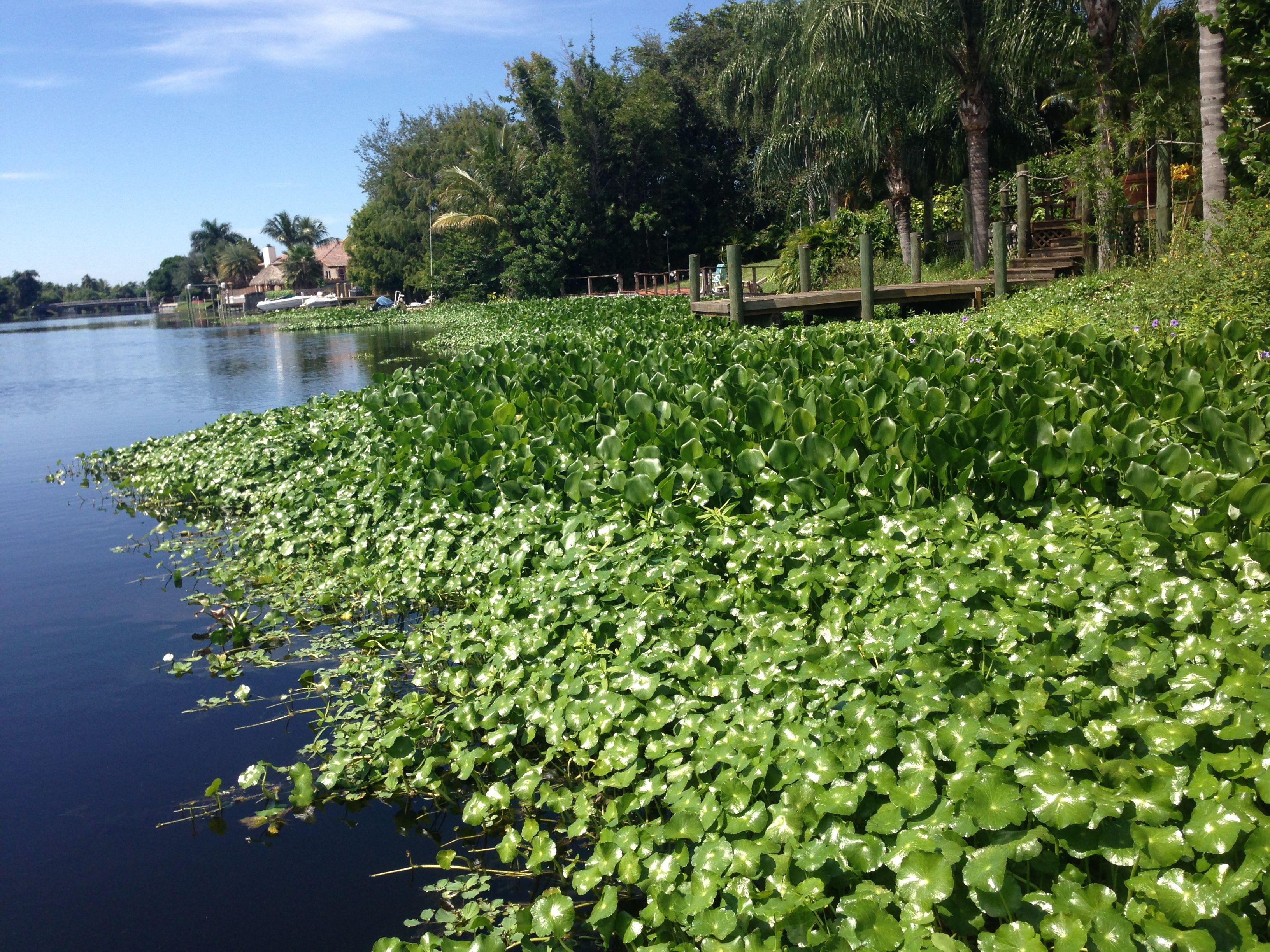 Took this while fishing along the canal in Boynton Beach, FL   South ...