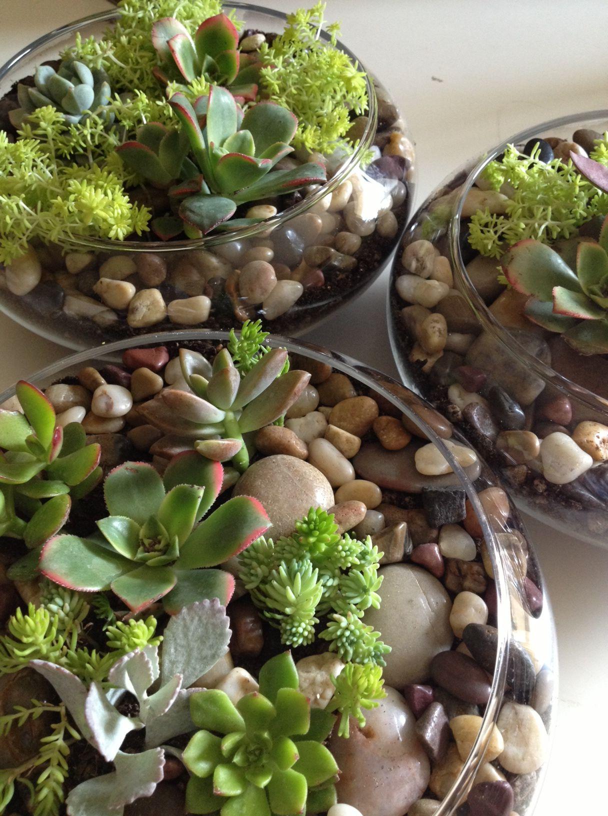 Diy succulent wedding centerpiece garden pinterest succulent