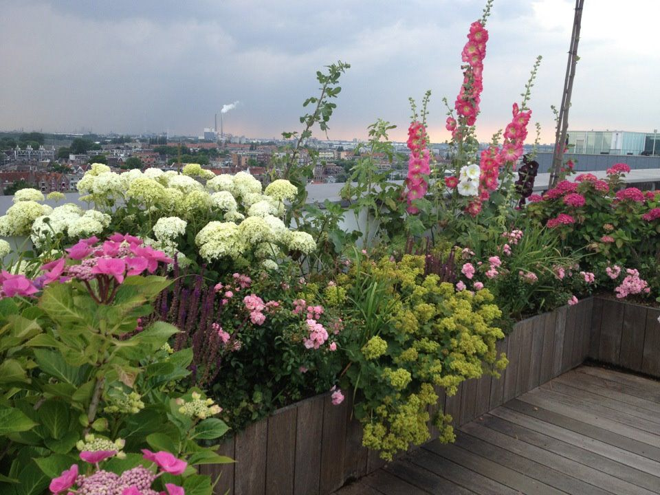 Raised bed on roof terrace Rooftop gardens Pinterest - terrassen ideen garten dachterrassen